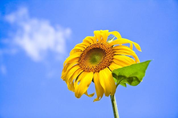 Schoonheid plantaardige flora zonnige hemel