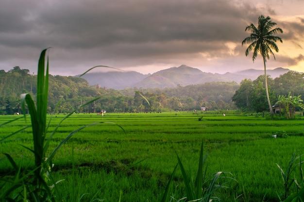 Schoonheid zonsondergang op rijstvelden indonesië met verbazingwekkende hemel in zonsopgang tijd azië