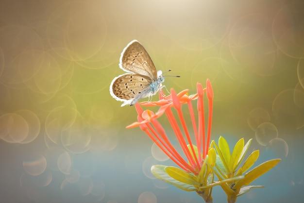 Schoonheidsvlinder op bloem in tropische tuin