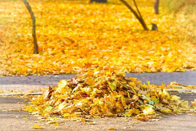 Schoonmaken in het park - hoop herfstgele bladeren op de grond