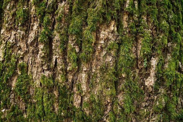 Schors bedekt met mos op de stam van een boom close-up
