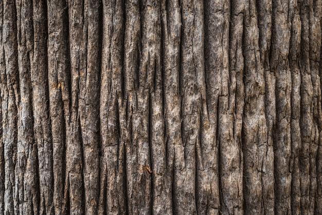 Schors textuur van de brede stam van een californische fan palmboom