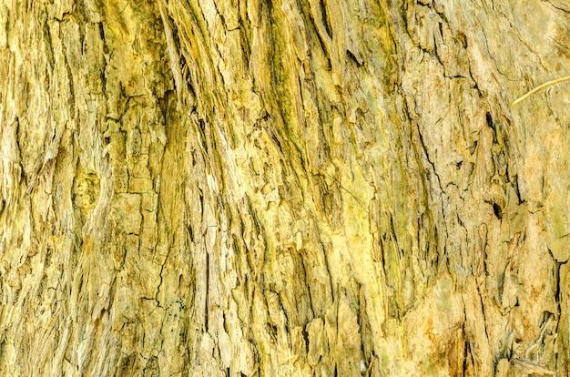 Schors van boomachtergrond en textuur