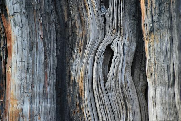 Schors van de achtergrond van de boomtextuur.