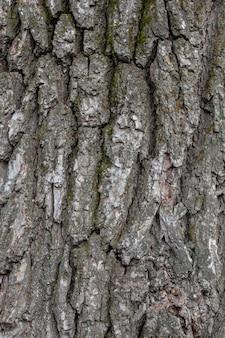 Schors van grijze textuur van het boom de houten mos