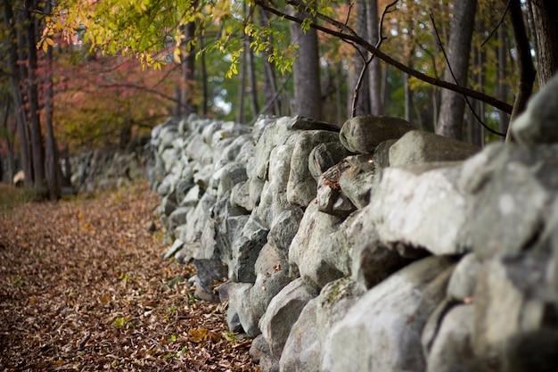 Schot van gevallen bladeren, bomen en grote stenen in een bos in de herfst