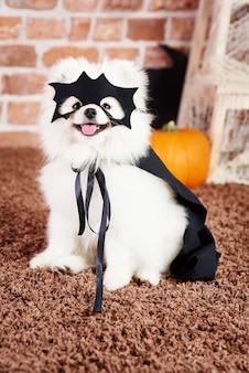 Schot van hond in superheldenkostuum