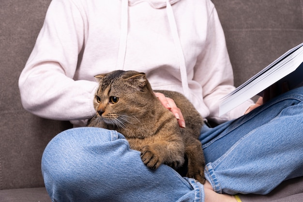 Schotse vouwen de schotse vouwenkat zit in haar wapens. het huisdier verstopt zich in de handen van de eigenaar die het boek leest