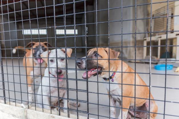 Schuilplaats voor dakloze honden, wachtend op een nieuwe eigenaar