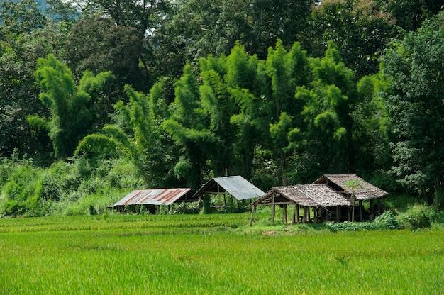 Schuilplaatsen in een veld, thailand