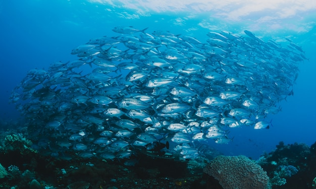 Schuim van vis onder water