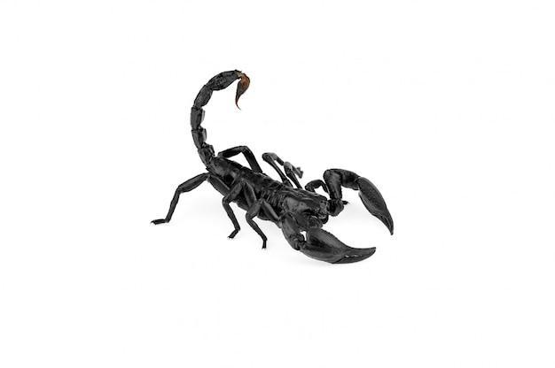 Scorpion geïsoleerd