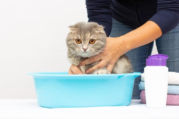 Scottish fold grijze kitten ligt in een wastafel