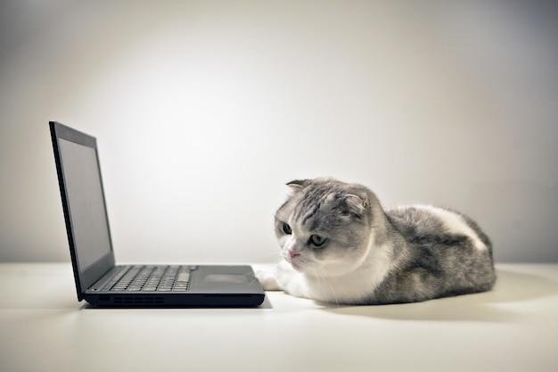 Scottish fold white tabby kat en notitieboekje een kat die bij de computer zit kat thuis