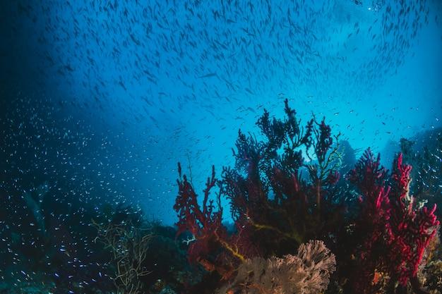 Scuba-duik. koraalrif. onderwater. zee oceaan