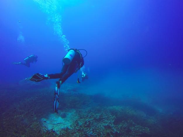 Scuba-duikers zwemmen over het levende koraalrif vol met vissen en zee-anemonen.