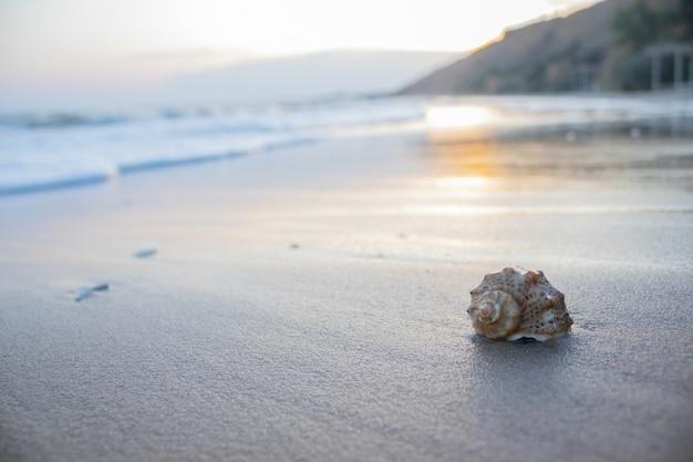 Sea shell ligt op het strand. zee op een achtergrond van prachtige zonsondergang