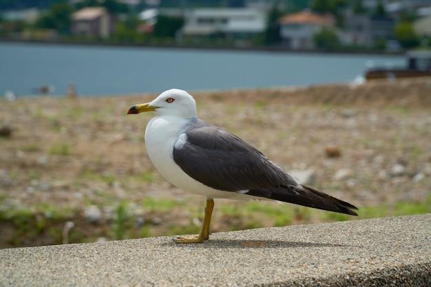 Seagull in de buurt van de kust