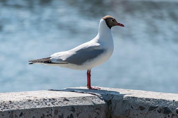 Seagull op betonnen pier
