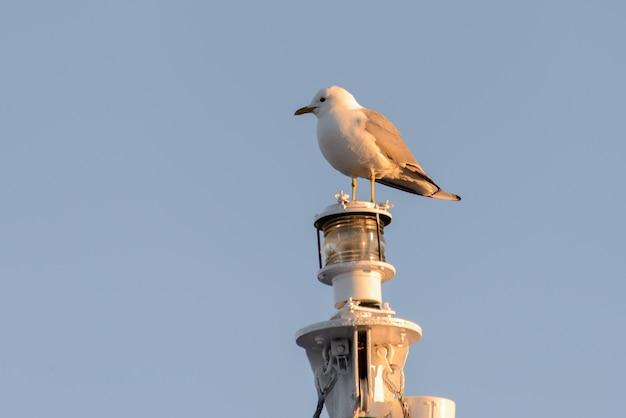 Seagull op de mast
