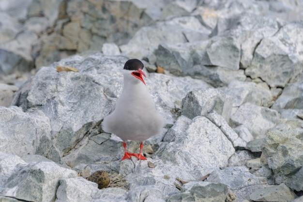 Seagull op de rots