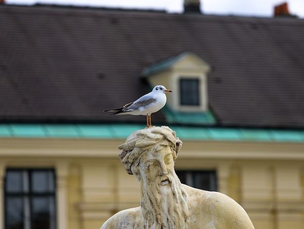 Seagull op het hoofd van een standbeeld