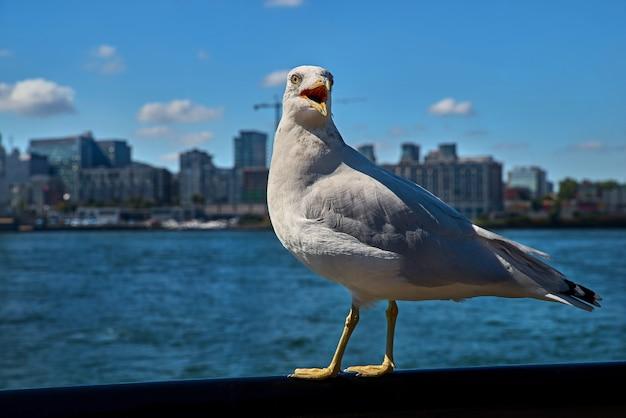 Seagull op zoek. uitzicht op de rivier en de stad
