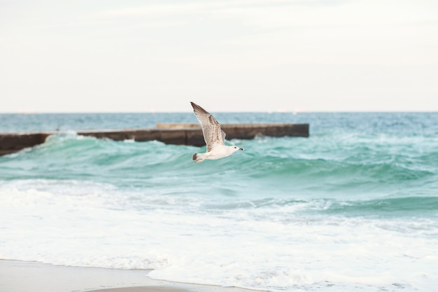 Seagull vliegen over de zee