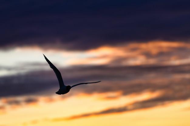 Seagull vliegt in een kleurrijke hemel van donkere wolken na onweer naar de zee