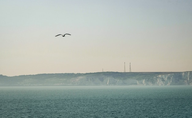 Seagull voor white cliffs of dover