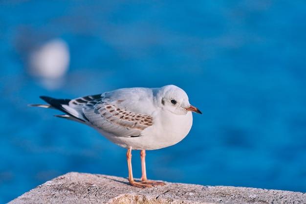 Seagull wandelen langs de kust naast zee op zonnige zomerdag