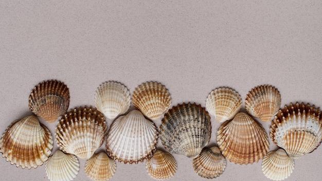 Seashell muur. collectie van schelpen op een pastel muur