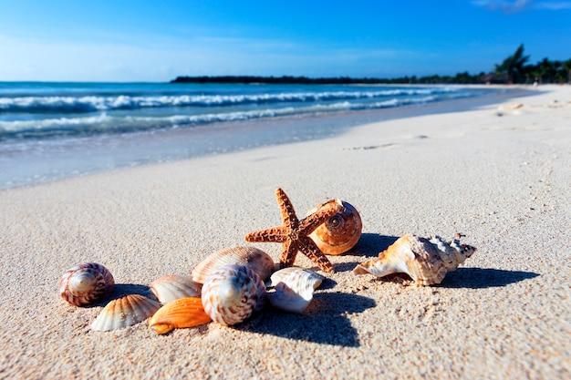 Seastar en schaaldieren op een caribisch strand