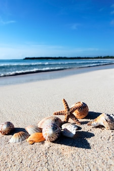 Seastar en schelpen op een caribisch strand