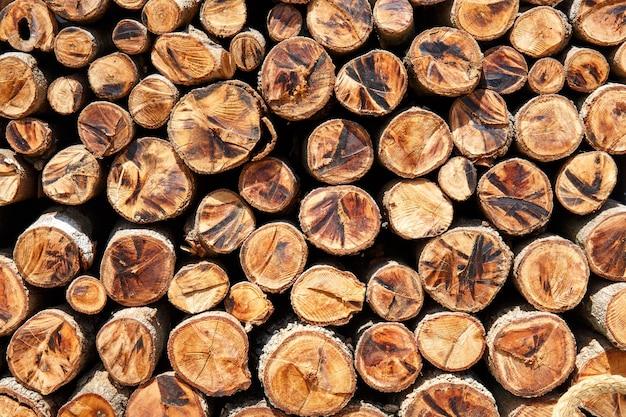 Sectie boom cirkel stronk gesneden groep, houtblokken achtergrond
