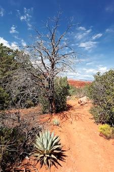 Sedona is een van de meest populaire plekken in arizona