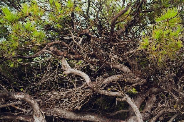 Sedum planten met dauw groeien op het dak van een stenen.