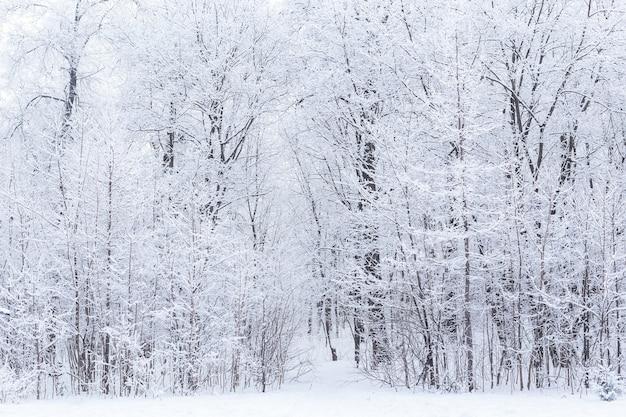 Seizoen en natuurconcept - winterpark in sneeuw.