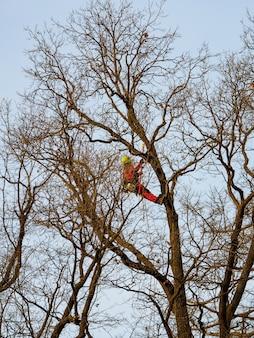 Seizoensgebonden snoeien van bomen in het stadspark.
