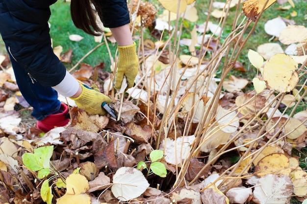 Seizoensgebonden tuinplanten die boer in gele handschoenen en rode rubberen laarzen snoeien, snijden takken van s...
