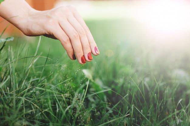 Seizoensmeststof van gras. sluit omhoog van de hand van de vrouw, behandelt het gazon.