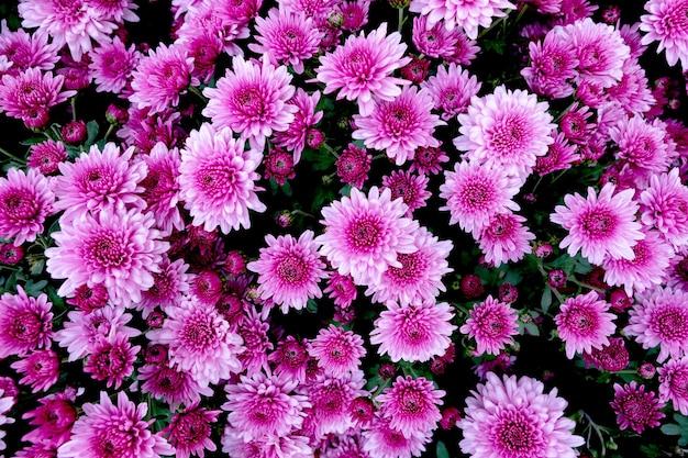 Selectie van veel paarse bloemen als achtergrond