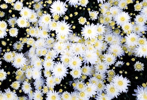 Selectie van vele kleurrijke bloemen als achtergrond