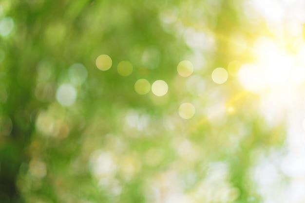 Selectief groen aardblad met zonlicht bokeh achtergrond. uitstekende kleurtoonstijl.