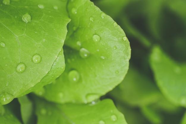 Selectieve aandacht close-up shot van ochtenddauw op groene bladeren