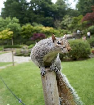 Selectieve aandacht die van een eekhoorn op het logboek in de tuin is ontsproten