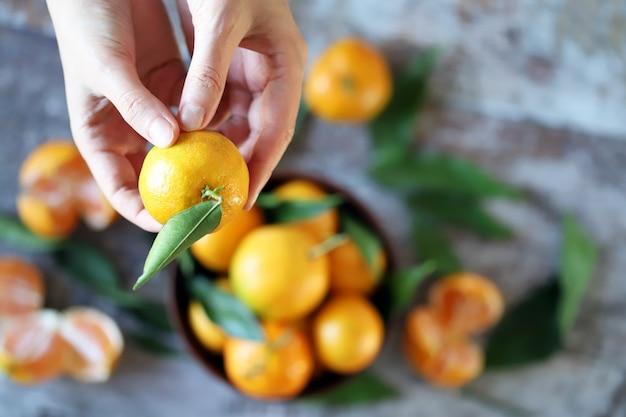Selectieve aandacht. hand houdt mandrin. rijpe mandarijnen met bladeren.