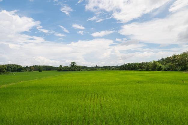 Selectieve aandacht natuur groen gras rijstveld landbouw voor berg met duidelijke ble lucht en cloud view landschap landschap-achtergrond