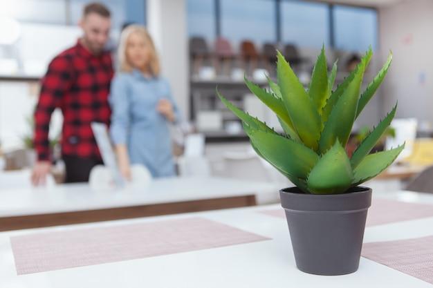 Selectieve aandacht op aloë in een pot, jong koppel winkelen voor meubels op achtergrond