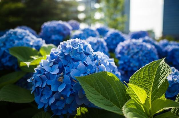 Selectieve aandacht shot van blauwe bloemen en groene bladeren